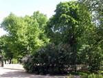 Gamla kyrkans park  Vanhan kirkon puisto