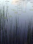 Förgrundsbild till album: Natur, Luonto
